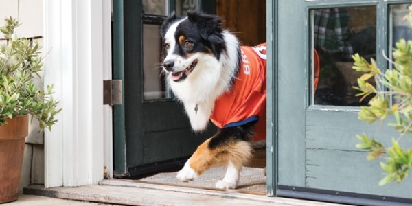 Rare $25 Off $75 Purchase Offer @ Petsmart