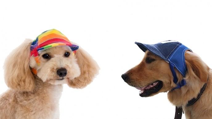 découvrir les dernières tendances charme de coût réduction jusqu'à 60% Happy Paws Dog Baseball Cap From $8 @ Amazon