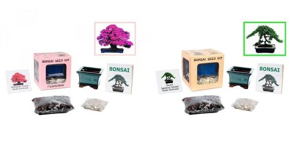 Complete Bonsai Seed Kit $13 @ eBay
