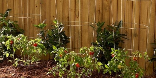 Woodstock Wire Tomato Cages Just $3.99 @ Kmart