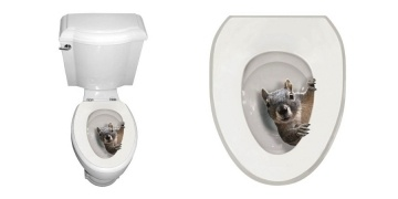 its-a-squirrel-toilet-seat-decal-dollar-1594-shipped-walmart-9831