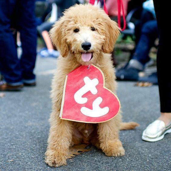 Dog Beanie Baby Tag Costume $19.99 @ Amazon